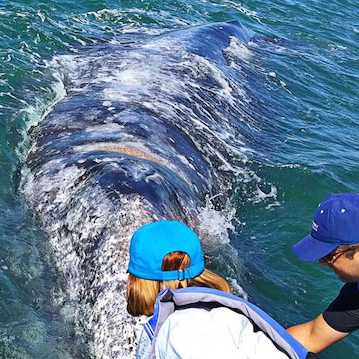 huge gray whale back people touching nautistyles