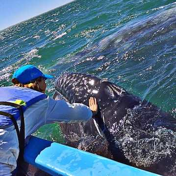 touch a whale in mexico baja best whale watching in the world happy girl nautistyles
