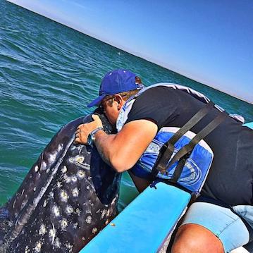 man kissing a baby whale in san ignacio lagoon nautistyles