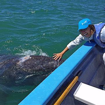 nautistyles touching a whale in san ignacio lagoon